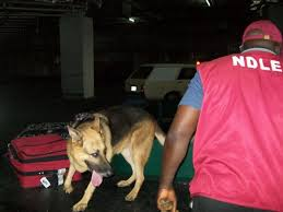 NDLEA Arrests 33 Suspects For Cultivating Cannabis
