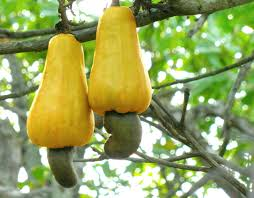Health Benefits Of Cashew