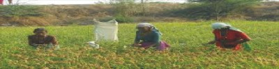 Expert Advises Farmers Against Early Planting