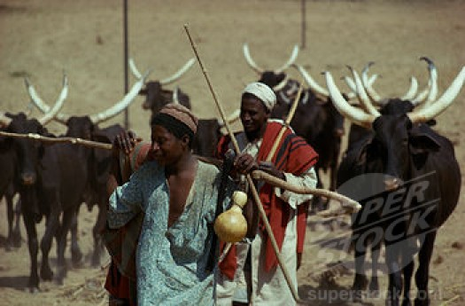 "University lecturers propose ""integrated settlements'' to end farmers-herdsmen clashes"
