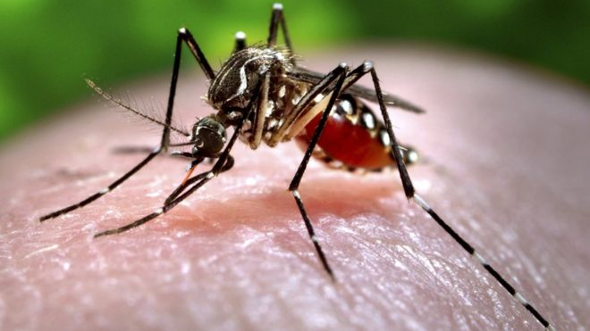 Mosquitoes are our friends, stop killing them – Don