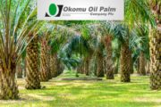 Okomu To Establish $45 Million Oil Palm Mill In Edo